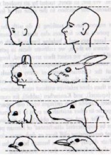 From Studies in Animal and Human Behavior, vol. II, by Konrad Lorenz, 1971. Methuen & Co. Ltd.